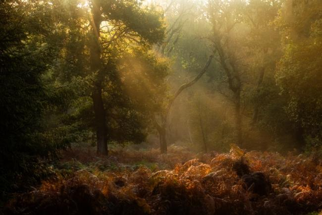 Echo Camera CLub Dorset picture. Autumn falls over Bolderwood by Luke Oxford. Must credit the photographer.