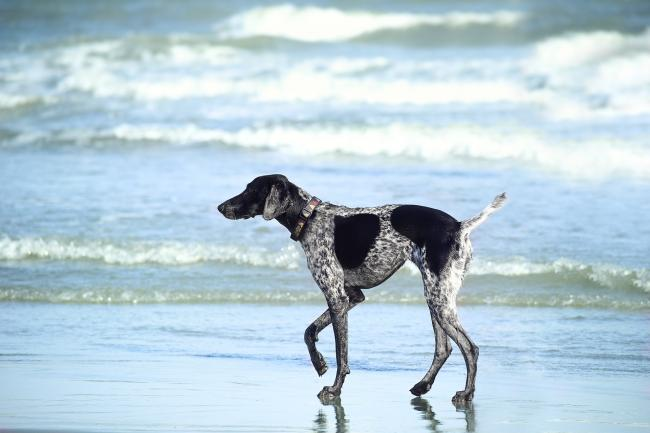 The rules for dogs on some Dorset beaches could change; here's what you need to know