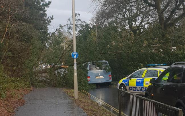 A tree fallen on Sandford Road in Wareham