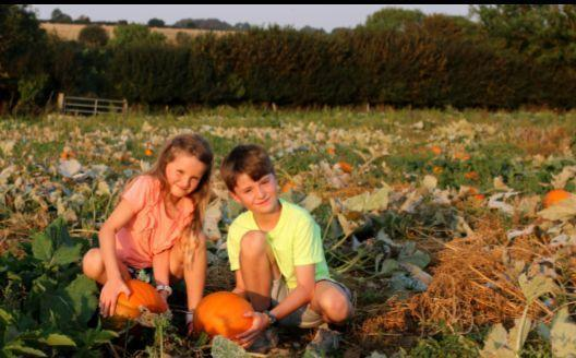 Here's where you can pick your own pumpkin for Hallowe'en this year. Picture: DORSET COUNTRY PUMPKINS