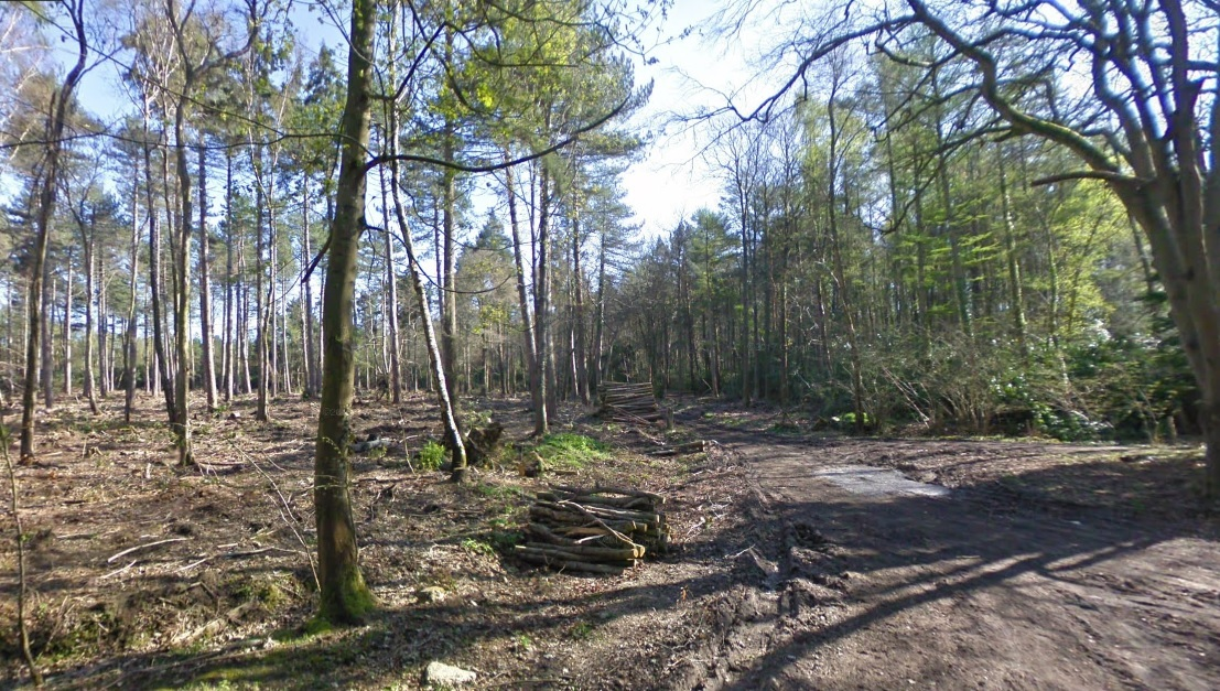 Part of the forest at Rempstone. Image: Google Streetview